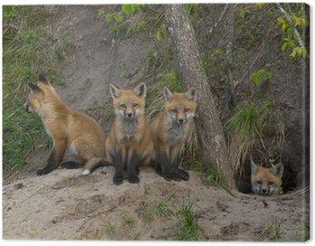 Obraz na Płótnie Miot Red Foxes