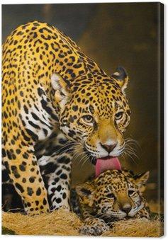 Obraz na Płótnie Młode jaguar