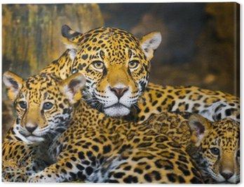 Młode jaguar