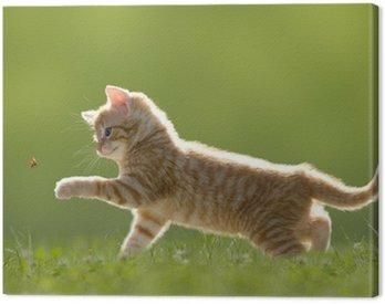 Obraz na Płótnie Młody kot z biedronka na zielonym polu