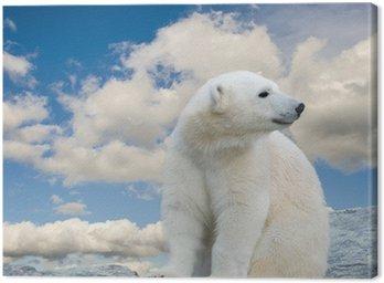 Obraz na Płótnie Młody niedźwiedź polarny