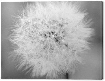 Obraz na Płótnie Mono Dandelion
