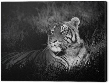 Obraz na Płótnie Monochromatyczny obraz Tygrys bengalski