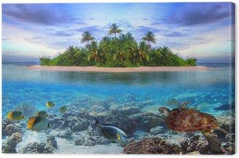 Obraz na Płótnie Morskie życie na tropikalnej wyspie Malediwów
