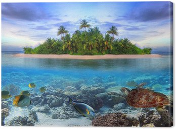 Morskie życie na tropikalnej wyspie Malediwów
