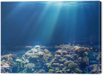 Obraz na Płótnie Morskiego lub oceanu podwodna rafa koralowa