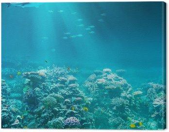 Obraz na Płótnie Morze lub ocean podwodna rafa koralowa z rekina