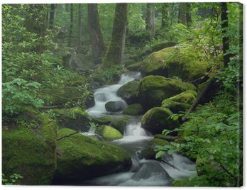 Obraz na Płótnie Mossy waterfall