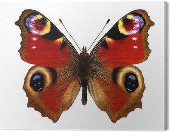 Motyl Europejskiego Peacock (pawik)
