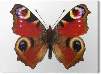 Obraz na Płótnie Motyl Europejskiego Peacock (pawik)