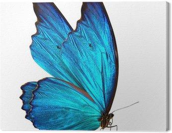 Obraz na Płótnie Motyl makro w tle