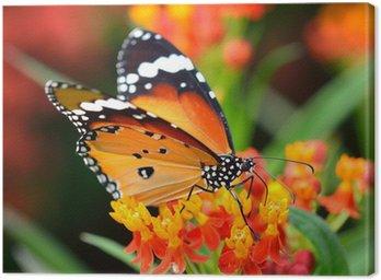 Obraz na Płótnie Motyl na pomarańczowy kwiat w ogrodzie