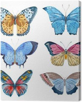 Obraz na Płótnie Motyle Akwarela wektor