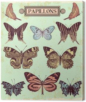 Obraz na Płótnie Motyle