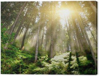Obraz na Płótnie Mystic Forrest mgłą wschodzącego i promieni słonecznych