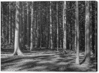 Obraz na Płótnie Nadelwald Monochrom
