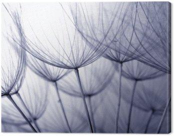 Obraz na Płótnie Nasiona mniszka lekarskiego