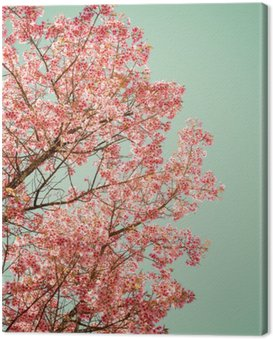 Obraz na Płótnie Natura tle pięknej wiśniowego drzewa różowy kwiat na wiosnę - rocznik pastelowych filtr kolorów