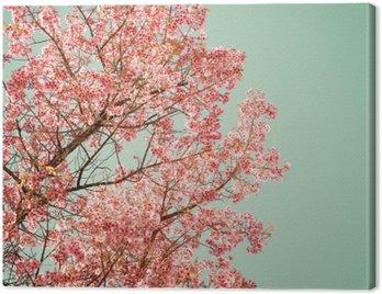 Natura tle pięknej wiśniowego drzewa różowy kwiat na wiosnę - rocznik pastelowych filtr kolorów