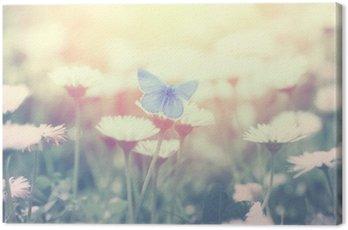 Obraz na Płótnie Niebieski motyl na kwiat stokrotka