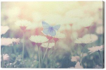 Niebieski motyl na kwiat stokrotka