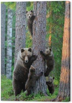 Obraz na Płótnie Niedźwiedź brunatny z młodymi w lesie
