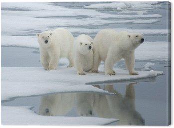 Obraz na Płótnie Niedźwiedź polarny i dwa szczeniaki roczniak