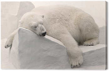 Obraz na Płótnie Niedźwiedź polarny śpi.