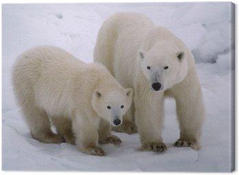 Obraz na Płótnie Niedźwiedź polarny z jej cub roku. Kanadyjska Arktyka