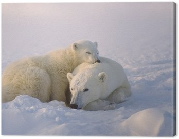 Obraz na Płótnie Niedźwiedź polarny z jej cub