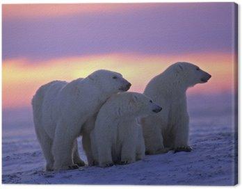 Niedźwiedź polarny z jej młodych w kanadyjskiej Arktyki zachodzie słońca