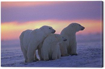 Obraz na Płótnie Niedźwiedź polarny z jej młodych w kanadyjskiej Arktyki zachodzie słońca