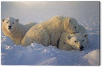 Niedźwiedź polarny z jej młodych
