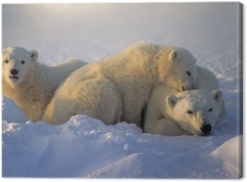 Obraz na Płótnie Niedźwiedź polarny z jej młodych