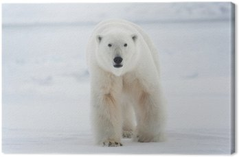Obraz na Płótnie Niedźwiedź polarny