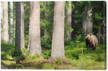 Niedźwiedź w lesie Panorama