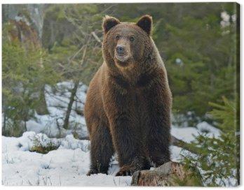Niedźwiedź w lesie w zimie