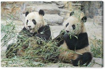 Obraz na Płótnie Niedźwiedzie panda w Pekinie w Chinach