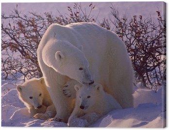 Obraz na Płótnie Niedźwiedzie polarne w Arktyce Kanadyjskiej