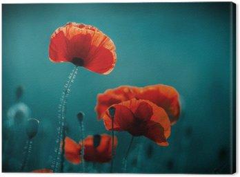 Obraz na Płótnie Niesamowite pole maku. Letnie kwiaty.