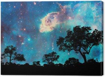 Obraz na Płótnie Nocny krajobraz z sylwetką drzewa i gwiaździstą noc