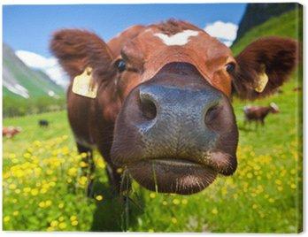 Obraz na Płótnie Norweski krowy