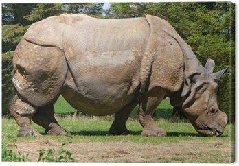 Obraz na Płótnie Nosorożec indyjski