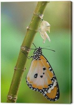 Obraz na Płótnie Nowo przekształcona butterfly