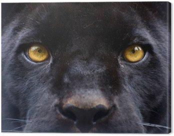 Obraz na Płótnie Oczy czarna pantera