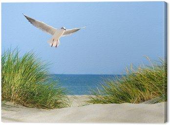 Obraz na Płótnie Odsłon wydmy, morze i mewa