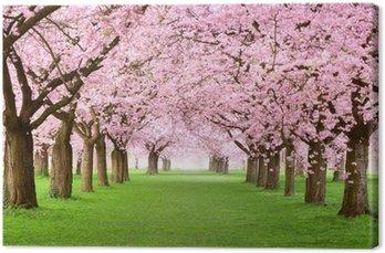 Obraz na Płótnie Ogrody kwitną w całości