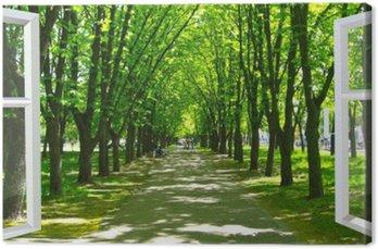 Okno otwarte na piękny park z wieloma zielonymi drzewami