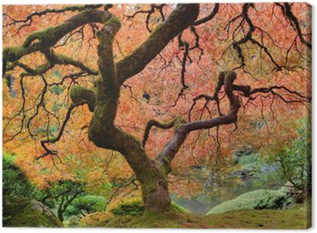 Obraz na Płótnie Old Japanese Maple Tree w Fall