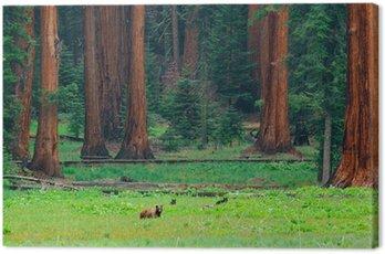Obraz na Płótnie Opatrzone w Sequoia National Park